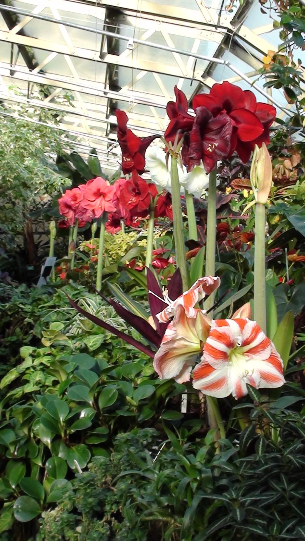 Image showing Inverness Botanic Gardens