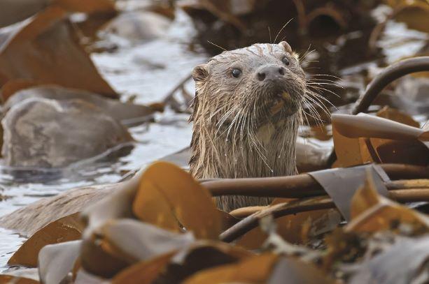 Image showing Kylerhea Otter Hide