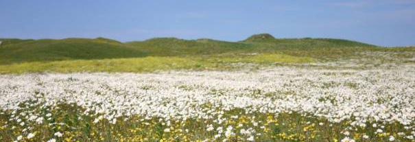 Image showing RSPB Scotland Balranald Nature Reserve