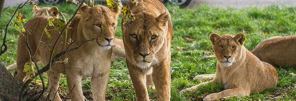 Image showing Blair Drummond Safari & Adventure Park
