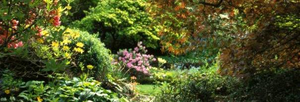 Image showing Branklyn Garden