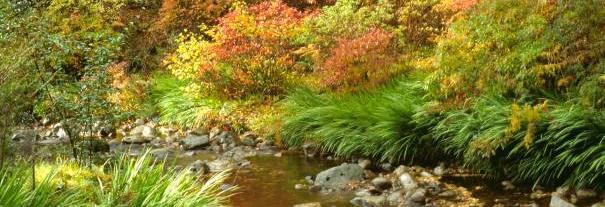Image showing Crarae Garden
