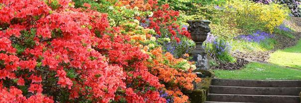 Image showing Dawyck Botanic Garden